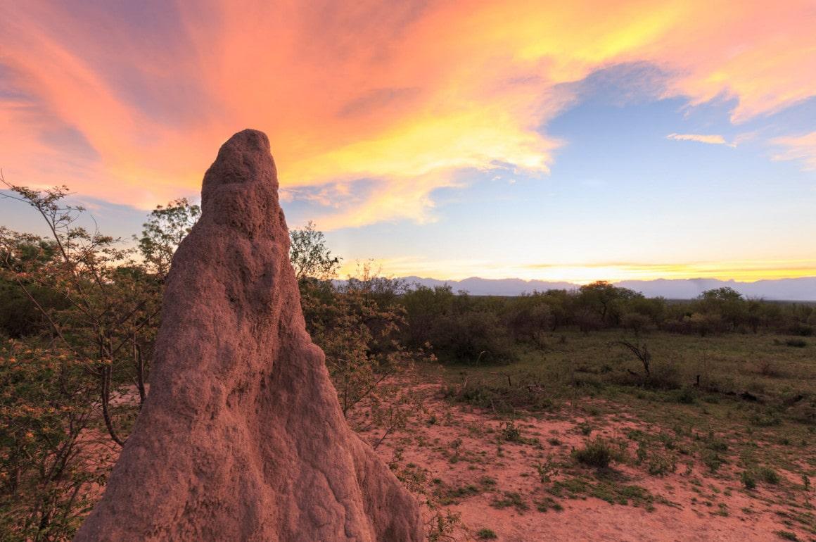 Termitenhügel in Karongwe