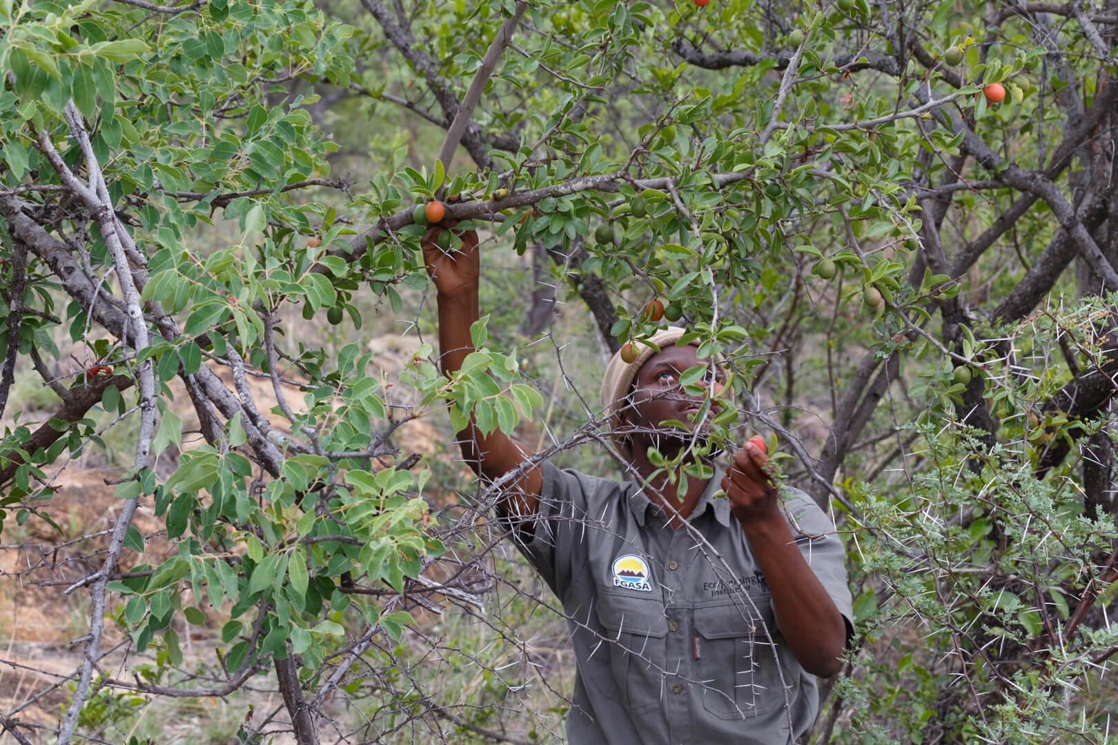 Buschwissen Südafrika